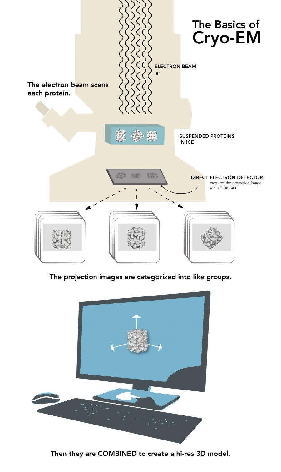 Cryo-EM infographics